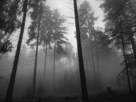 foggy_forest_.jpg